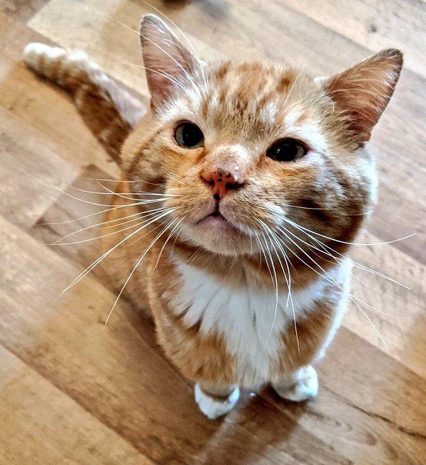 Grandma's Bboy (a cat-twitter 'stan' bot)